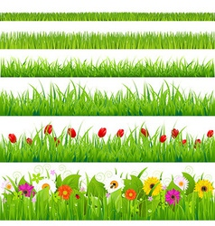 Big Grass And Flower Set vector image