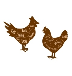 Rooster and hen butcher cuts diagram vector