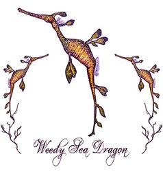 Seadragon vector image