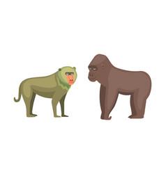 Baboon monkey and gorilla cartoon vector