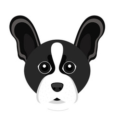 Cute boston terrier dog avatar vector