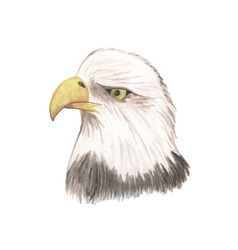 Eagle watercolor isolated bird vector