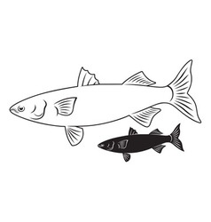 fish mullet vector image
