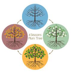 Four seasons plum tree vector