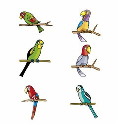 Set of parrots isolated on white vector