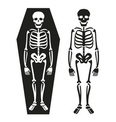 skeleton in coffin death symbol vector image