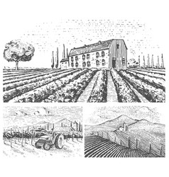 vineyards landscape tuscany fields old looking vector image