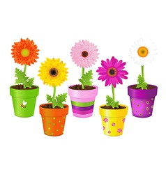 Daisies In Pots With Pictures vector image vector image