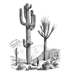 Saguaro vintage engraving vector