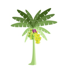 Banana Tree with Bananas and Blossom vector image vector image