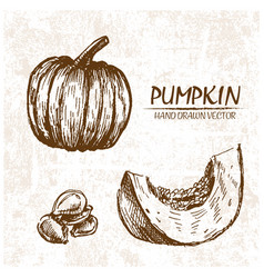 Digital detailed pumpkin hand drawn vector