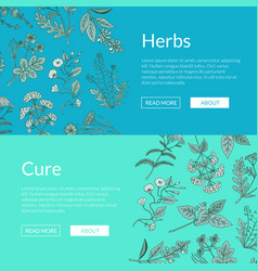 hand drawn medical herbs web banner vector image