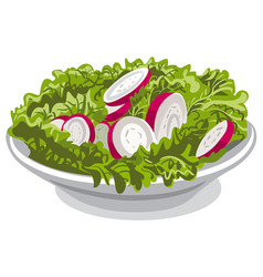 Salad with radish vector