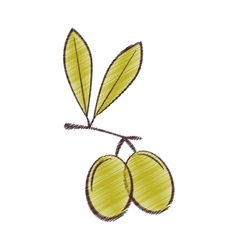 drawing olive leaves green design vector image