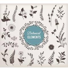 Set of Botanical Elements vector image vector image