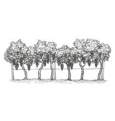 Hand drawn vineyard vine vector
