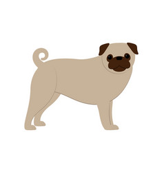 pug dog- vector image