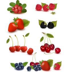 big set of berries and cherries vector image vector image