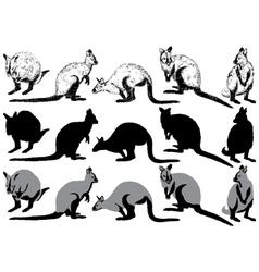 Set of kangaroo on a white background vector