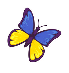 Butterfly in yellow and blue colors isolated on vector