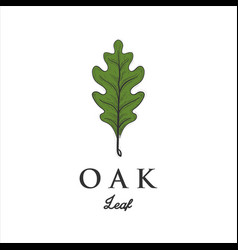 hand drawn oak leaf designs vector image