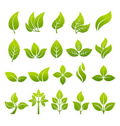 Stylized plants to design logos vector