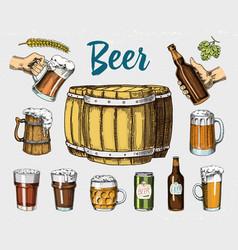 beer glass mug or bottle wooden barrels vector image