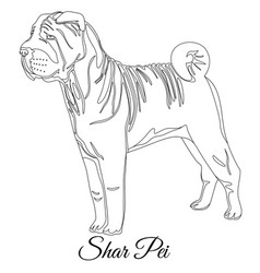 chinese shar pei dog outline vector image