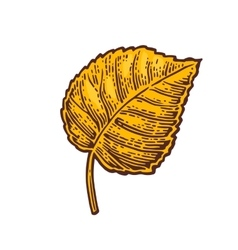 Linden leaf color vintage engraved vector