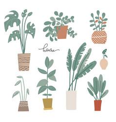 potted plants set in scandinavian palms vector image