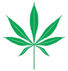 cannabis leaf1 resize vector image vector image