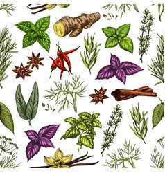 Organic herbs and spice seasonings sketch pattern vector