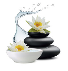 Water lily flowers and zen stone bowl with water vector