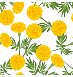 Yellow marigold on white background vector