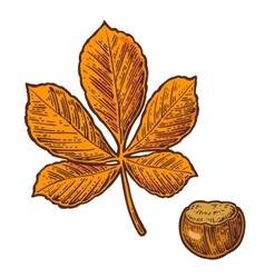 Chestnut leaf and nut color vintage vector image vector image