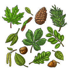 set leaf acorn chestnut and seed vintage vector image