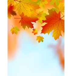 Fall yellow maple leaves EPS 8 vector image