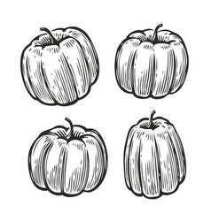 pumpkin set sketch vegetables food vintage vector image