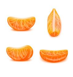 Realistic detailed 3d tangerine slices set vector
