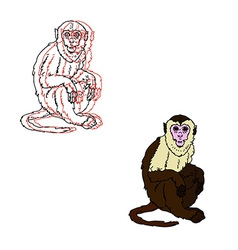 Capuchin monkey on a white background vector image