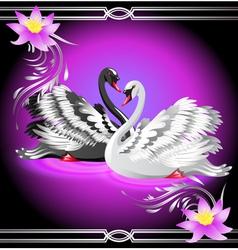 elegant swan vector image