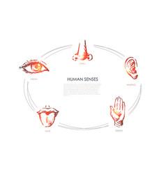human senses - vision taste touch hearing vector image