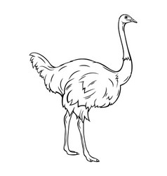 outline ostrich icon vector image