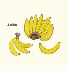set of line-art bananas overripe banana single vector image