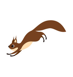 squirrel on white background vector image