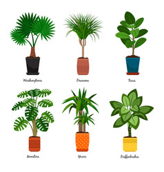 decorative indoor palm trees in pots vector image vector image