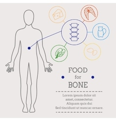 Food for bone vector image