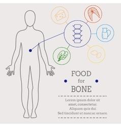 Food for bone vector