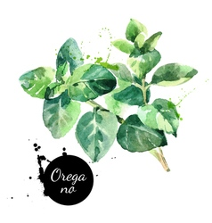 Watercolor hand drawn oregano leaves Isolated eco vector