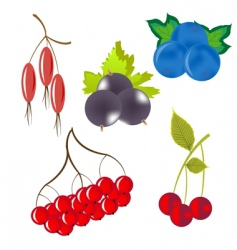 Wild berries vector